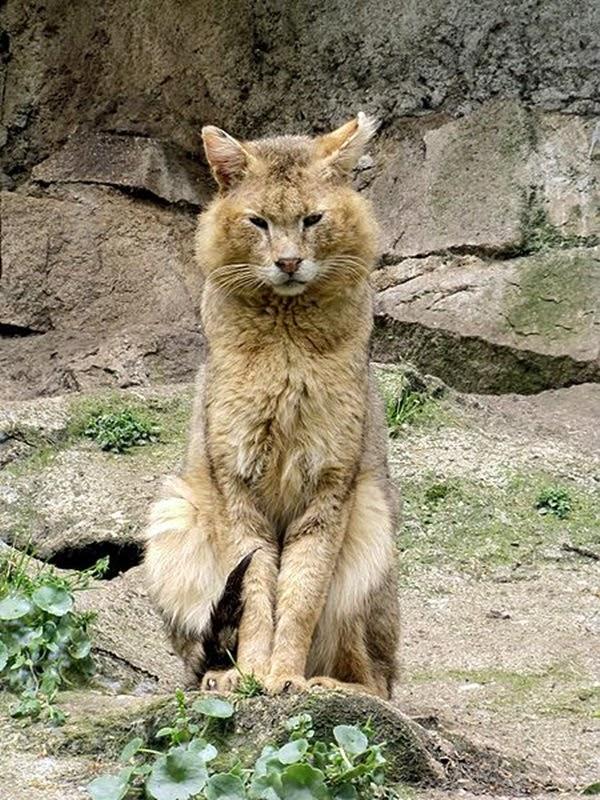 http://1.bp.blogspot.com/-lKNUPqW35iI/UkwoJjpCqmI/AAAAAAAAJdg/EQ5VspknVp8/s1600/Jungle+Cat.jpg