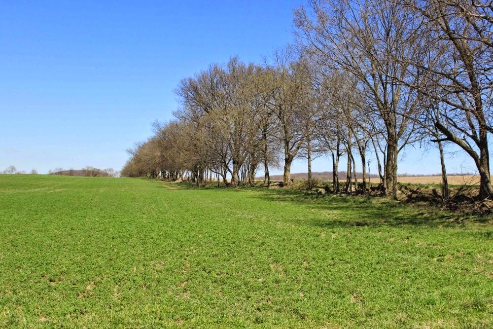 trees at thomas farm loop