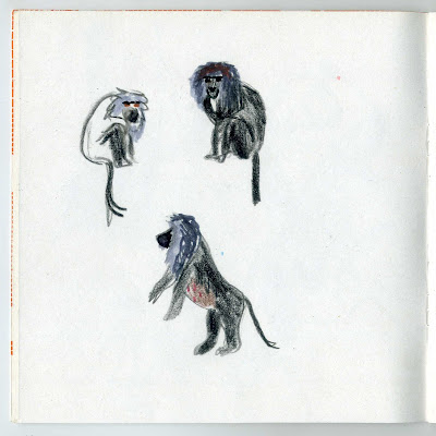 illustration animaux singe