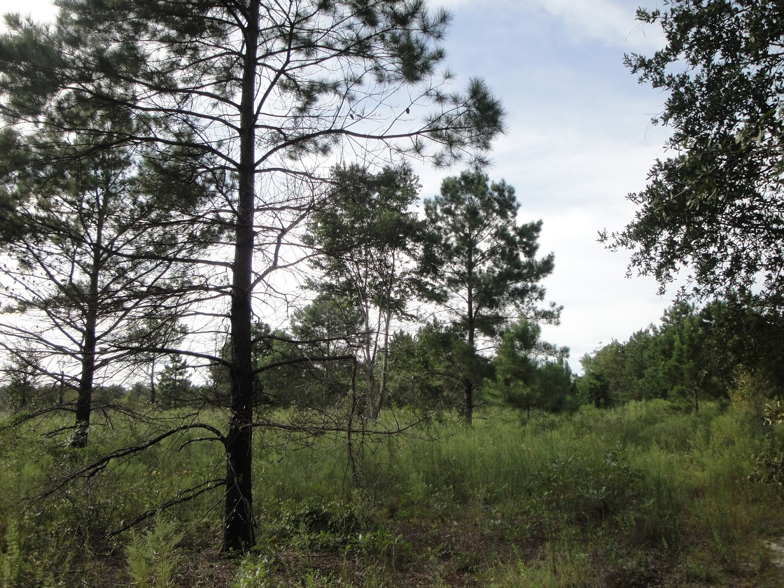 18 acres of land for sale in Lake City Wellborn, Florida