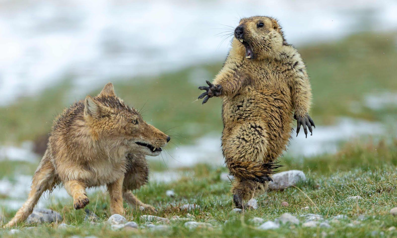 World Wildlife Photography