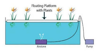 Hydroponic System Deep Water Culture