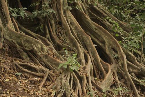 Tipos de raízes das plantas  Mundo Biologia
