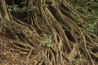 Tipos de raízes das plantas