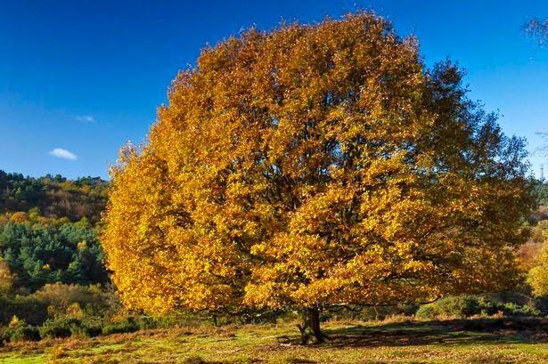 Alternativas para cuidar el medio ambiente cient ficos for Arboles de jardin de crecimiento rapido