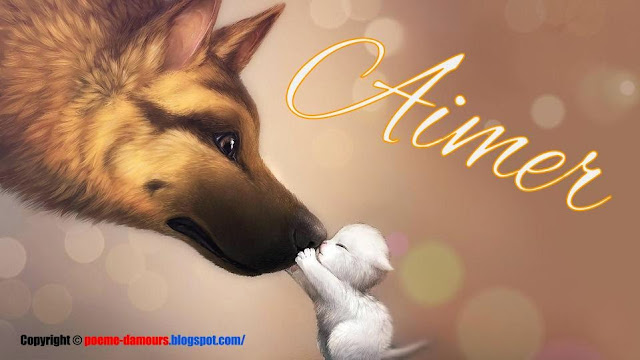 Example d'un amour entre chien et chat - poème d'amour