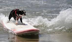 If we had a surfboard, this would be Sadie!