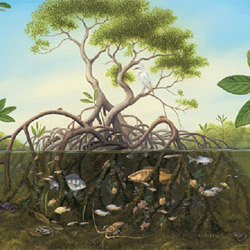 adalah ekosistem dengan ciri khusus di mana lantai hutannya tergenang oleh air yang tingg Ekosistem Hutan Mangrove : Ciri, Fungsi, dan Kerusakannya