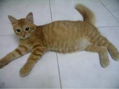 foto kucing kampung lucu 02