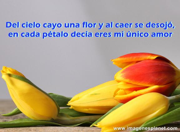 Tarjetas, Imágenes  de lindas flores para compartir en Facebook