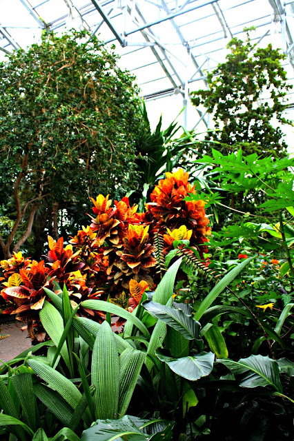 Tropical conservatory at Frederik Meijer Gardens in Grand Rapids, Michigan.