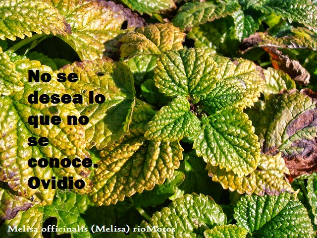 Frases y flores