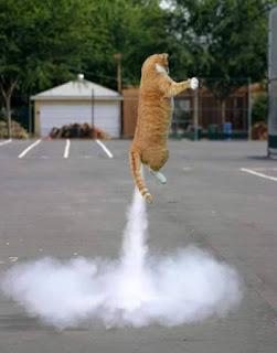 Mèo đánh bom thâm hậu