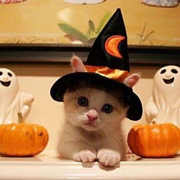Cat on Halloween