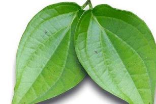 manfaat dan khasiat daun sirih untuk pengobatan