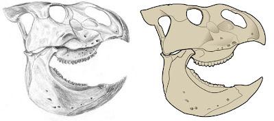 Udanoceratops skull