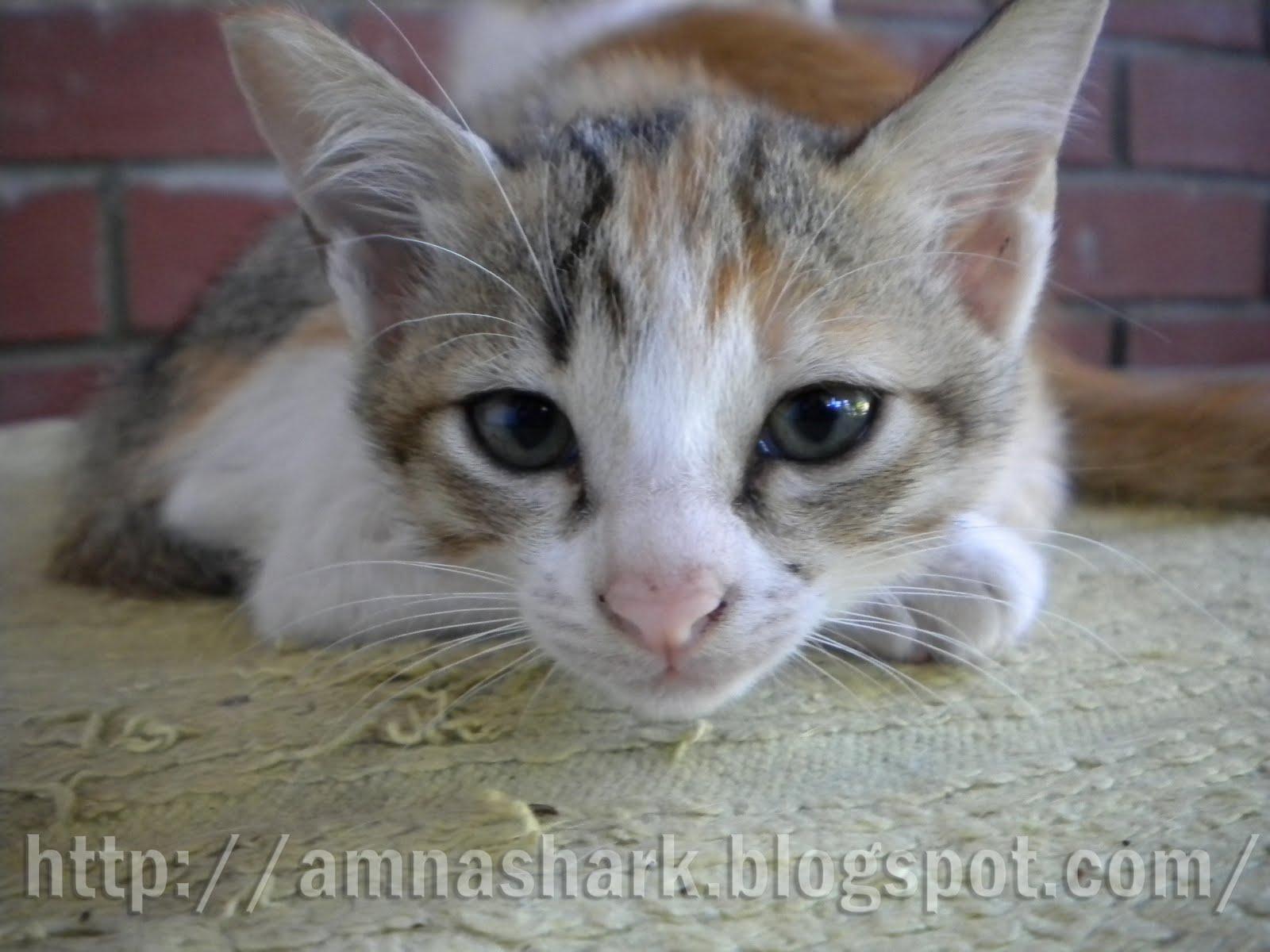 Gadis Misteri Koleksi Gambar Kucing Aku