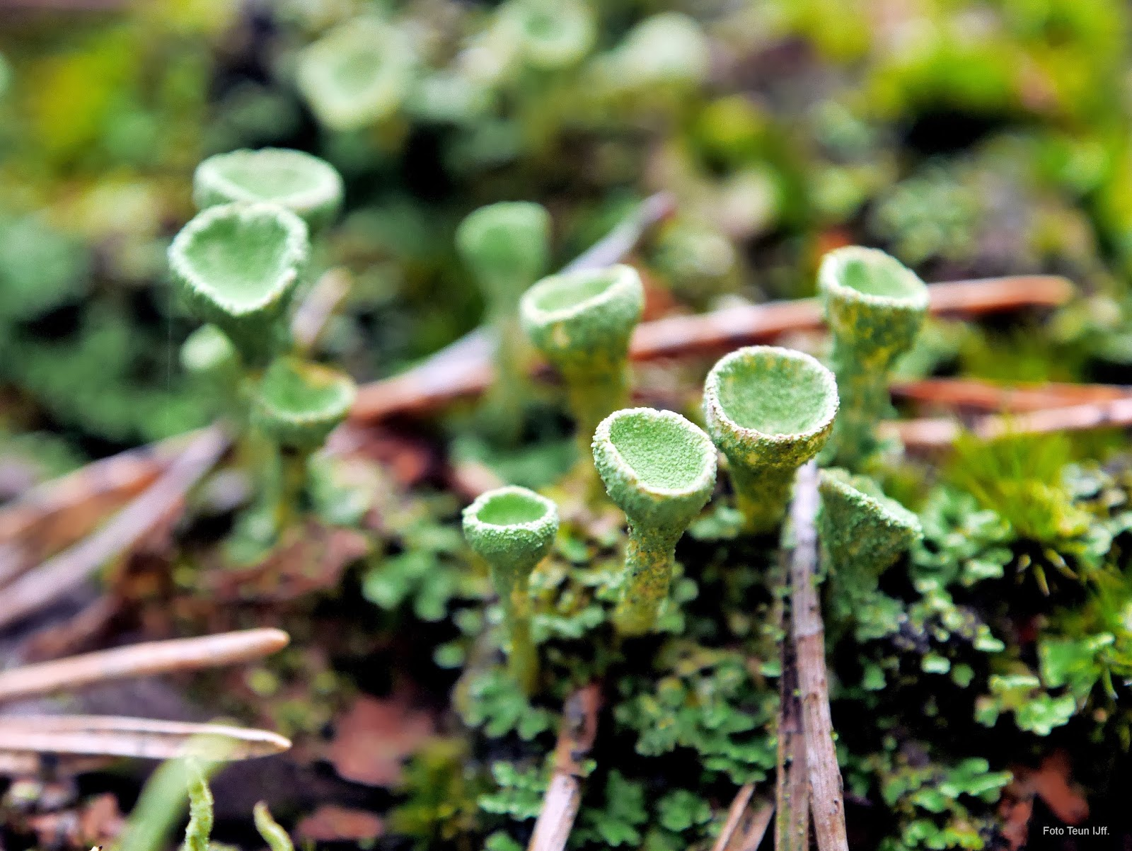 Teun, mijn dag van vandaag: Mossen, korstmossen en paddenstoelen ...