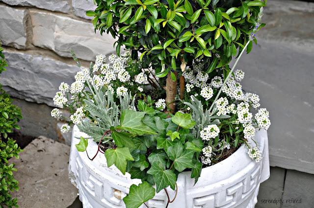 Summer Urn Planter Container Garden Hydrangea Lavender Rose Ivy Grey White Green Pink Purple