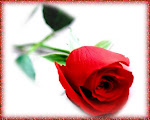 E...as rosas ñ falam