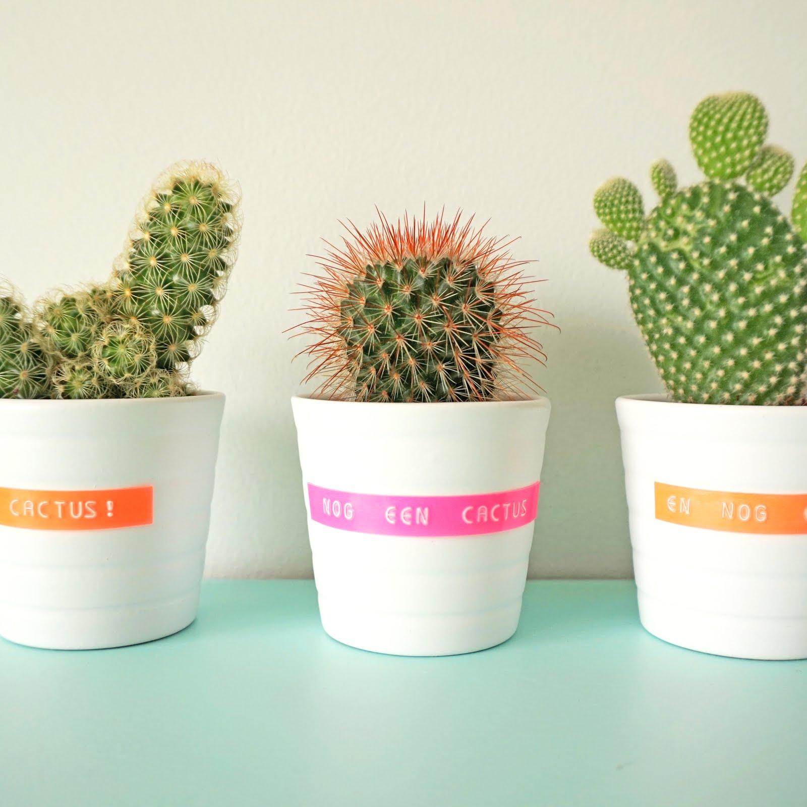Gelabelde cactuspotjes