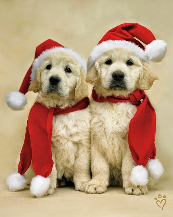 See more Two Christmas dogs http://cutepuppyanddog.blogspot.com/