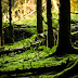 Green forest floor / nature wallpaper