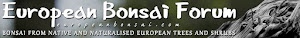 European Bonsai Forum