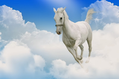 kuda putih berlari editan