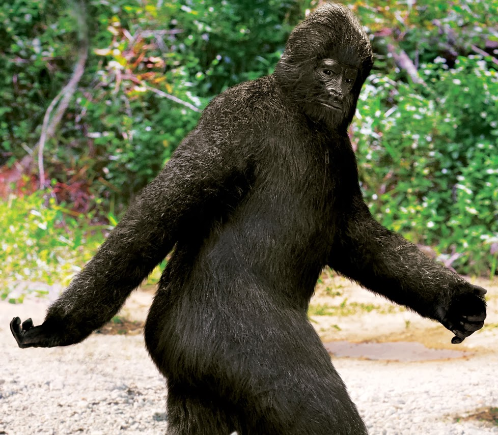 bigfoot girls Explore gail de vos's board sasquatch images on pinterest | see more ideas about funniest pictures, funny photos and bigfoot sasquatch.