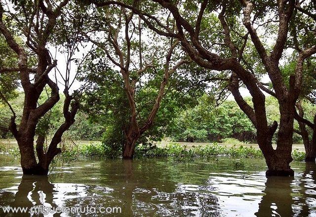 Kompong-Phluk-manglares
