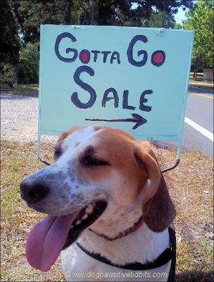 Gotta Go! Dog and I are moving Home!