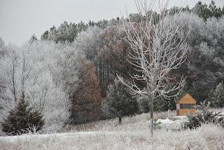 Hoar frost: Winter wonder