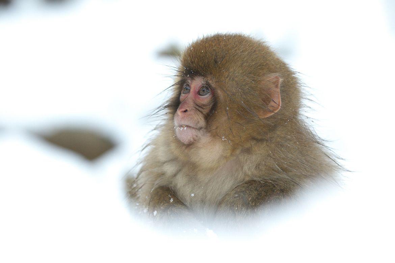 30. Photograph Snow Baby by Masashi