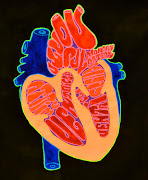 Human Heart Diagram. Ink, Acrylic, Fluorescent on paper