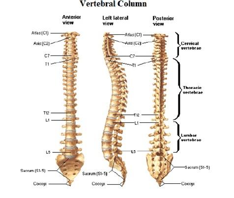 spondylosis columna lumbalis