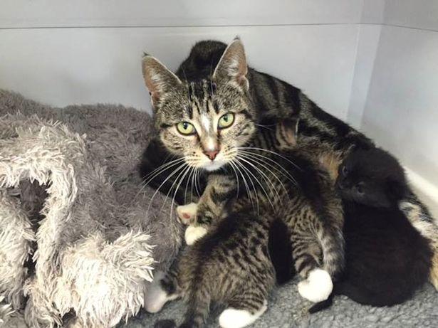 Kucing di klinik yang sedang menyusui anak-anaknya