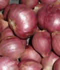 khasiat, bawang merah