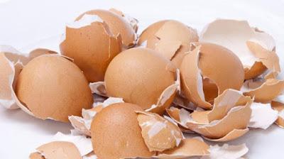 Kulit Telur Baja Organik