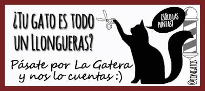 Gato llongueras Encuesta Gatera Rumbo
