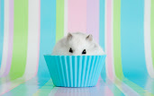 #15 Hamster Wallpaper