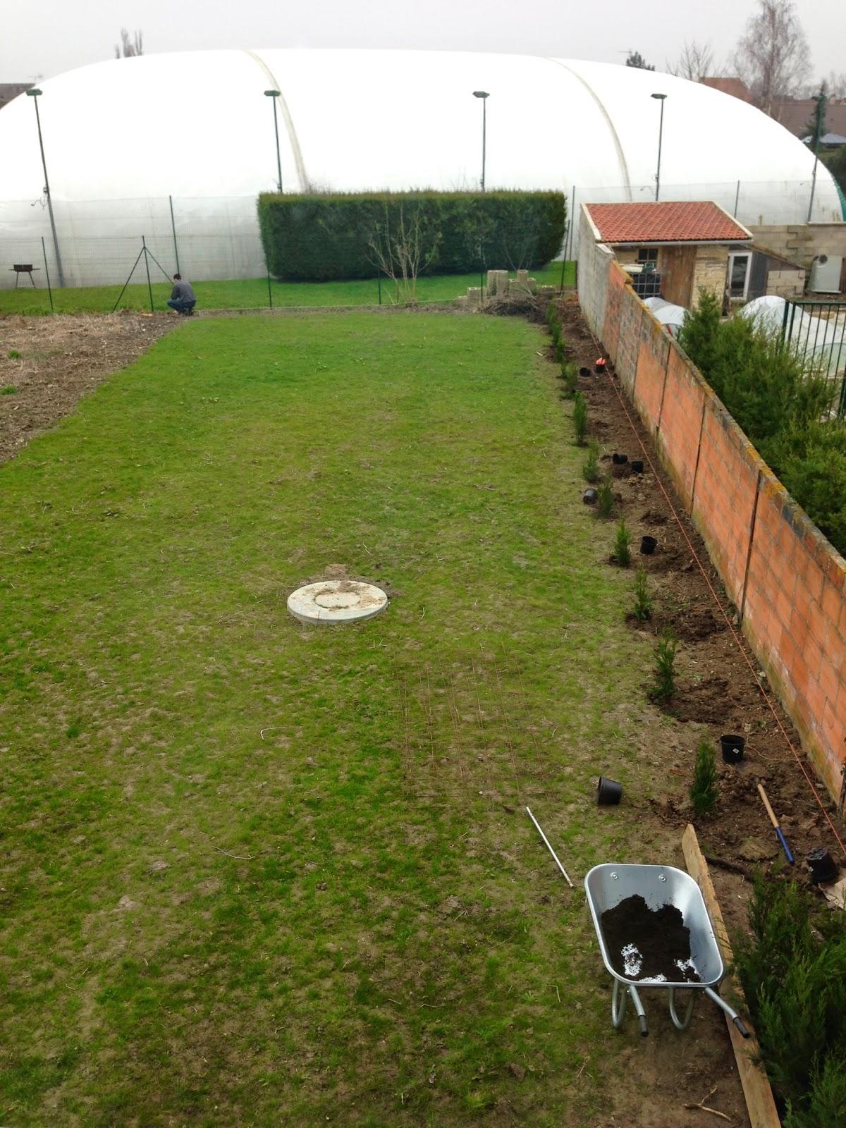 Un jardin des fleurs le commencement - Plantation cypres de leyland ...