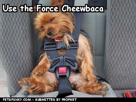 Funny Chewbacca and Yoda Pics!