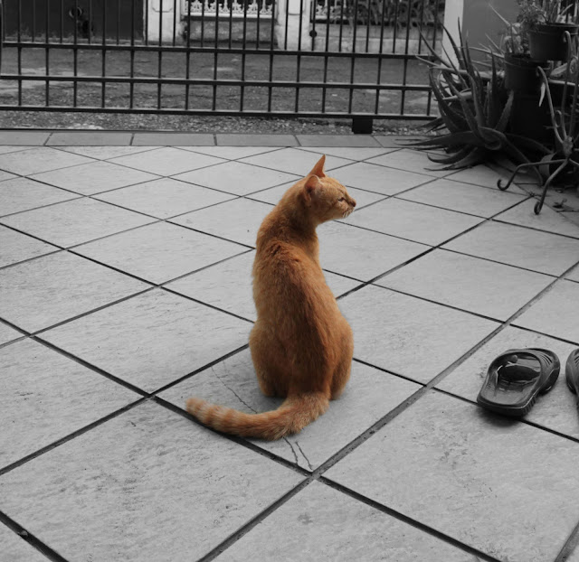 Ibu Kucing