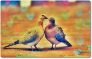 Pigeon-Love