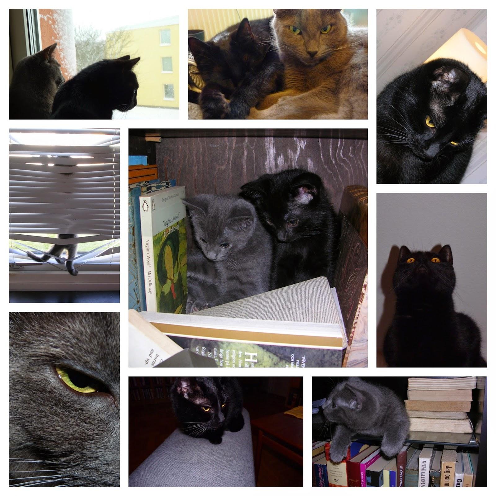 collage av foton på två katter, en svart och en grå. foto: Reb Dutius