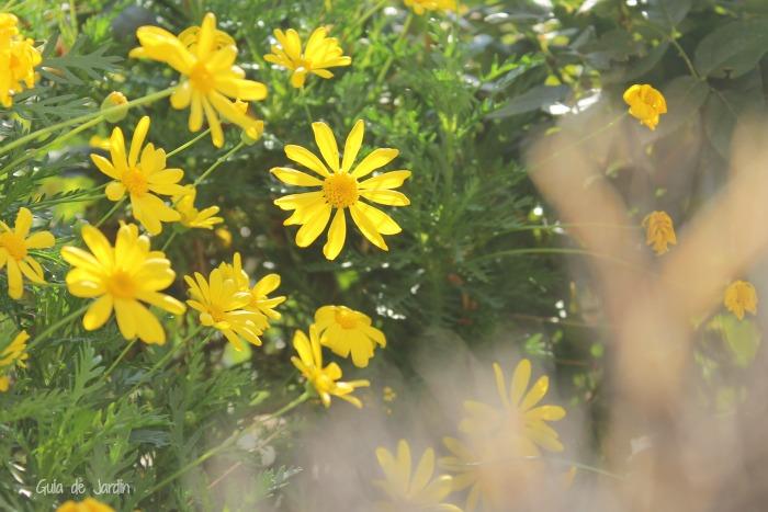 Flores y plantas de invierno en exterior e interior guia for Plantas para invierno