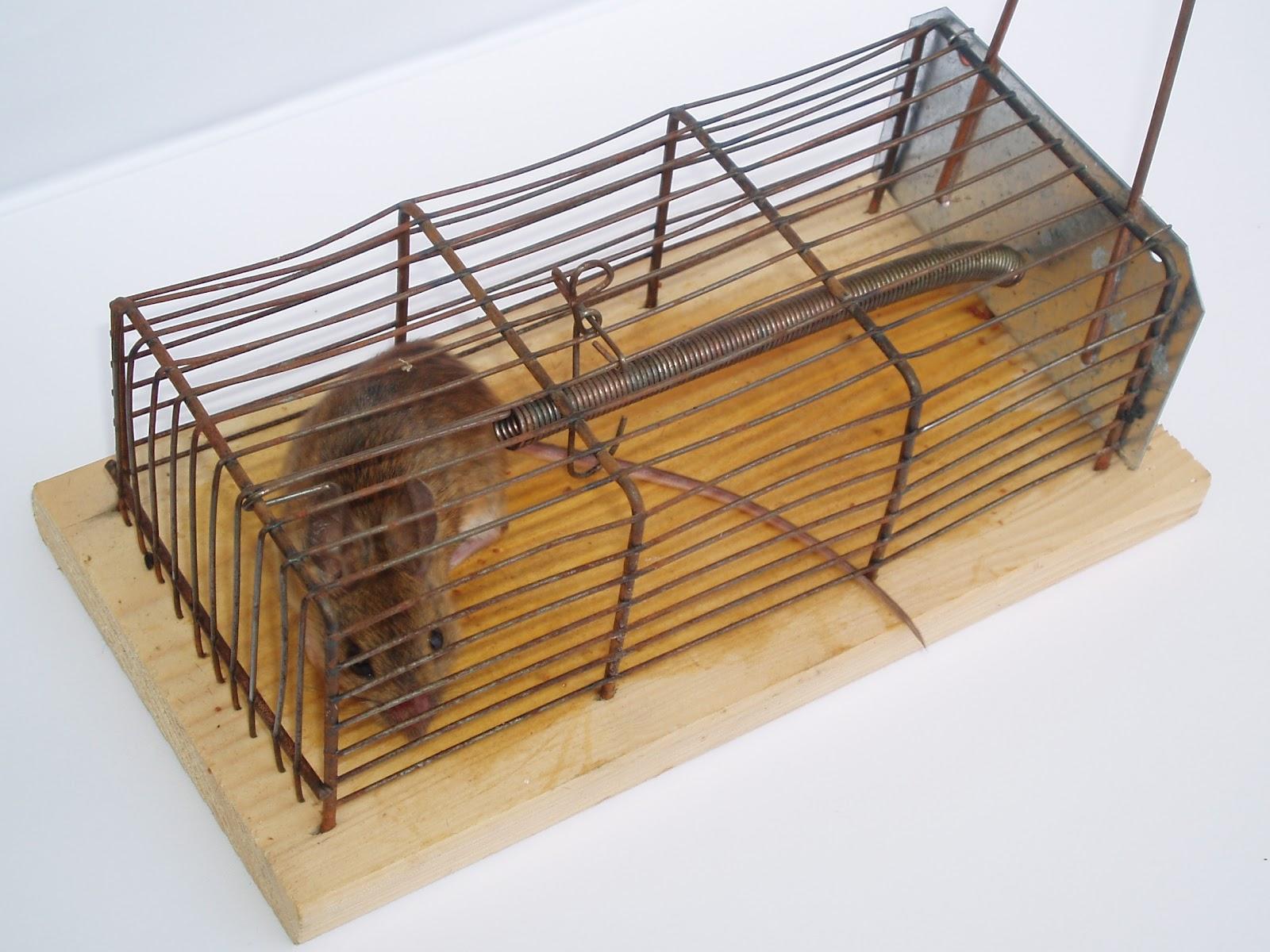 Ловушка для крыс 59