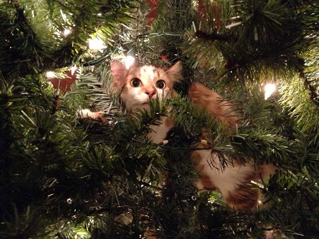 Funny cats - part 81 (40 pics + 10 gifs), cat pics, cat stuck in christmas tree