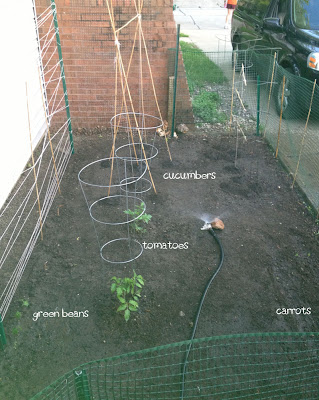 My Summer Garden Plot
